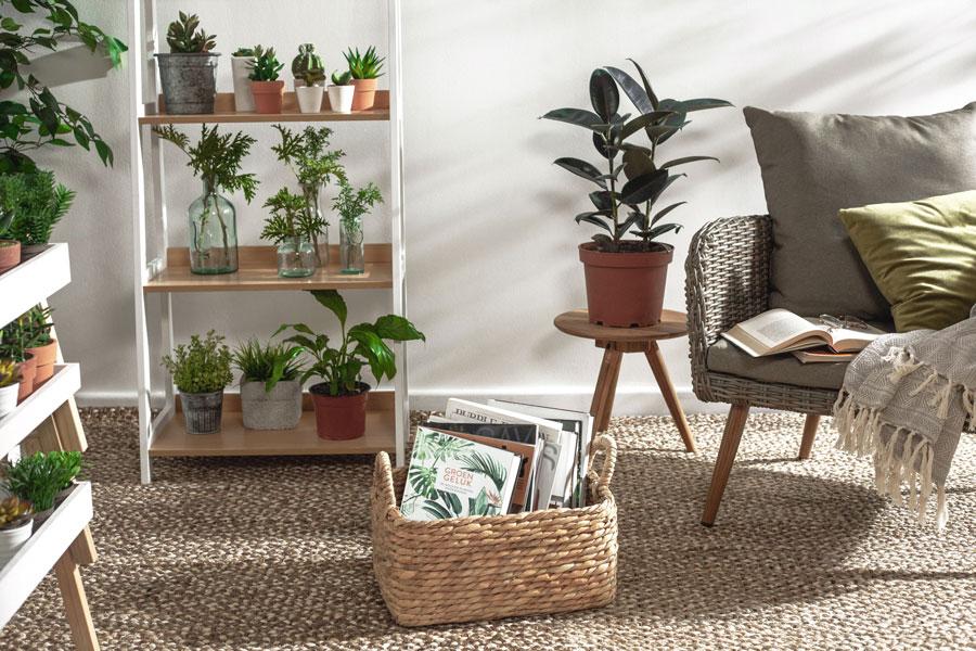 Espacio iluminado y con varios estantes llenos de plantas