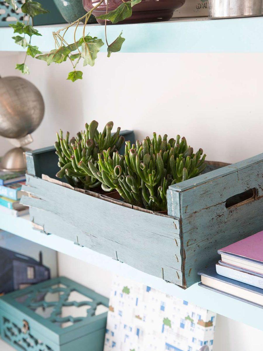 plantas para estantería librería