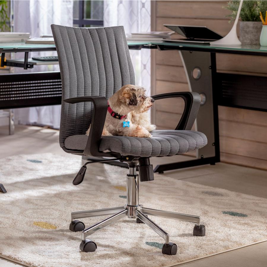 Perro sentado en silla de escritorio