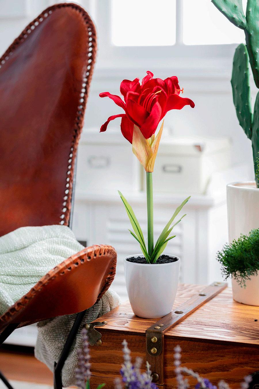 Planta con flor roja