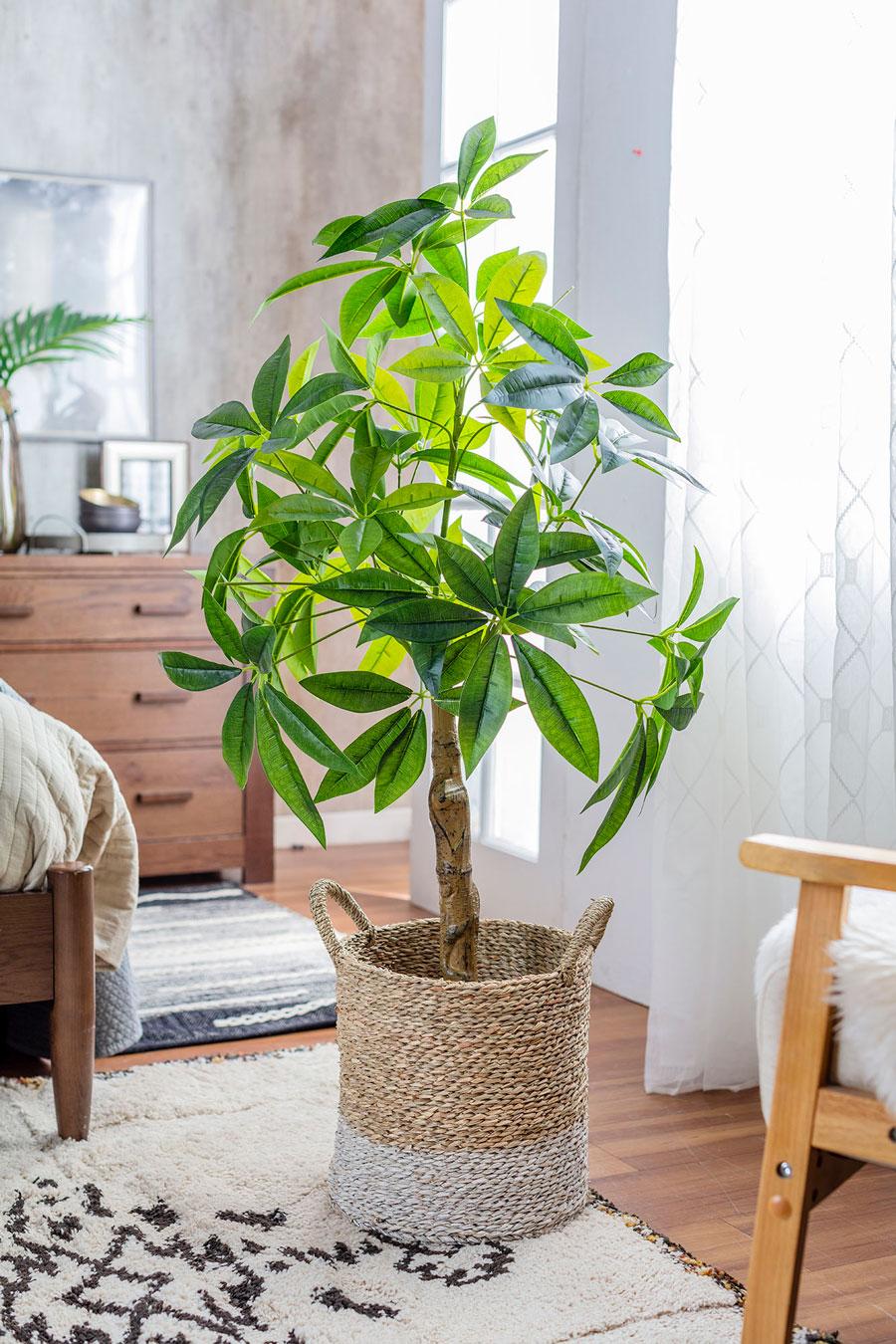 Plantas con canasto como maceta